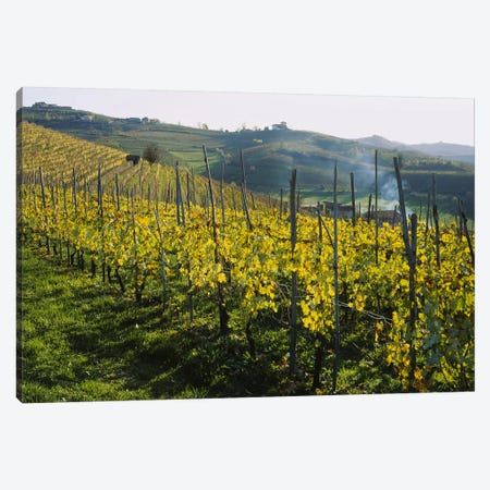 Vineyard Landscape, Piedmont, Italy Canvas Print #PIM5322} by Panoramic Images Canvas Art Print