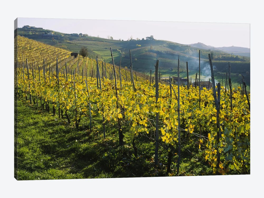 Vineyard Landscape, Piedmont, Italy by Panoramic Images 1-piece Canvas Art