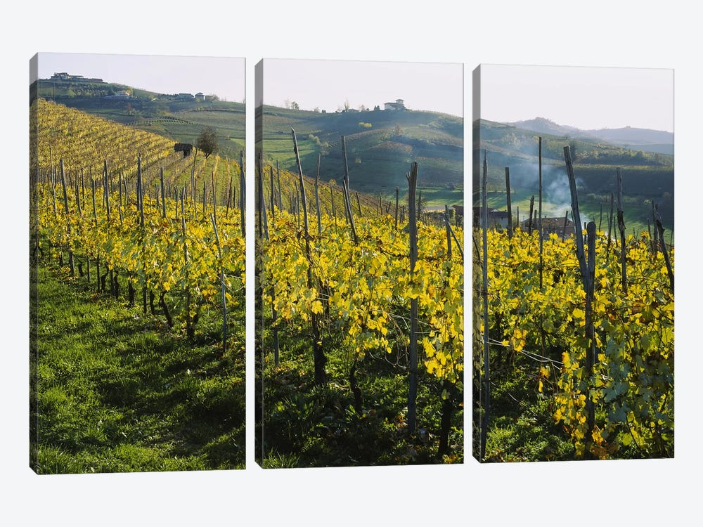 Vineyard Landscape, Piedmont, Italy by Panoramic Images 3-piece Canvas Art