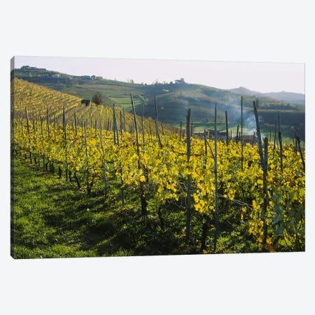 Vineyard Landscape, Piedmont, Italy Canvas Print #PIM5322} by Panoramic Images Canvas Art Print