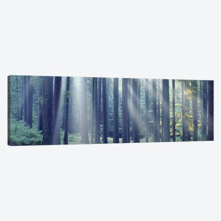 Sunlight passing through trees in the forest, South Bohemia, Czech Republic Canvas Print #PIM5327} by Panoramic Images Canvas Art