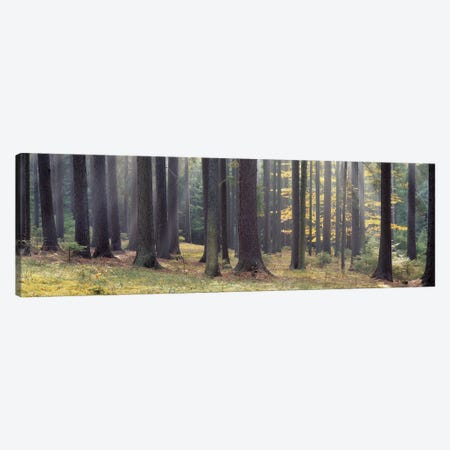Trees in the forest, South Bohemia, Czech Republic Canvas Print #PIM5328} by Panoramic Images Canvas Art Print