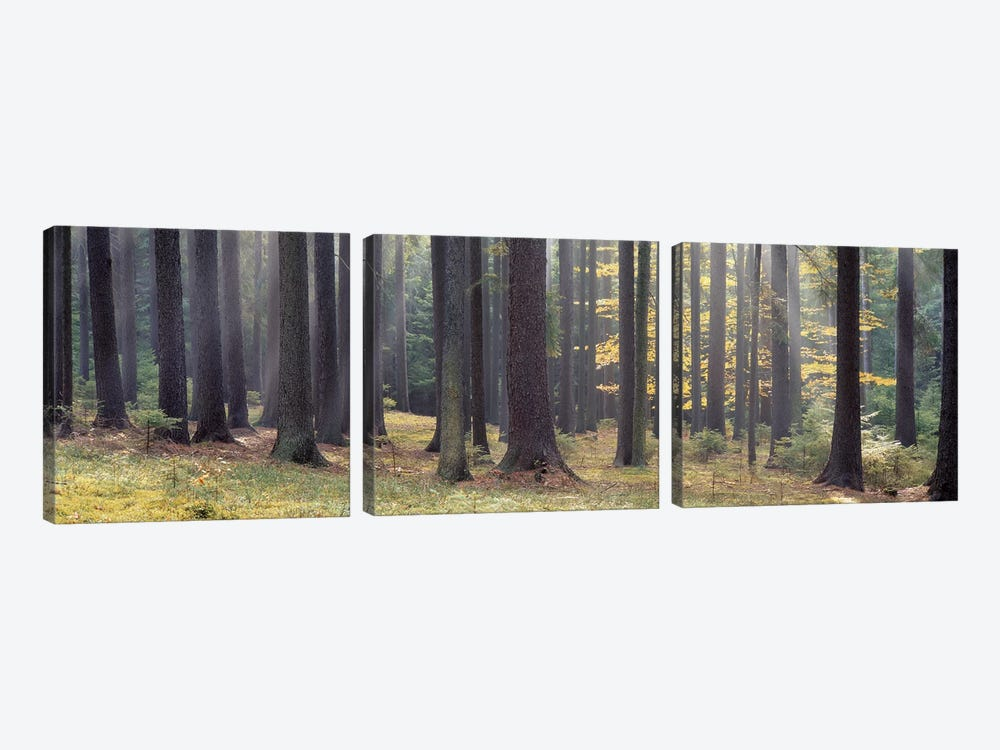 Trees in the forest, South Bohemia, Czech Republic by Panoramic Images 3-piece Canvas Wall Art