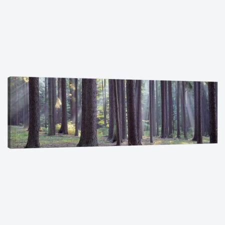 Trees in the forest, South Bohemia, Czech Republic #2 Canvas Print #PIM5329} by Panoramic Images Canvas Print