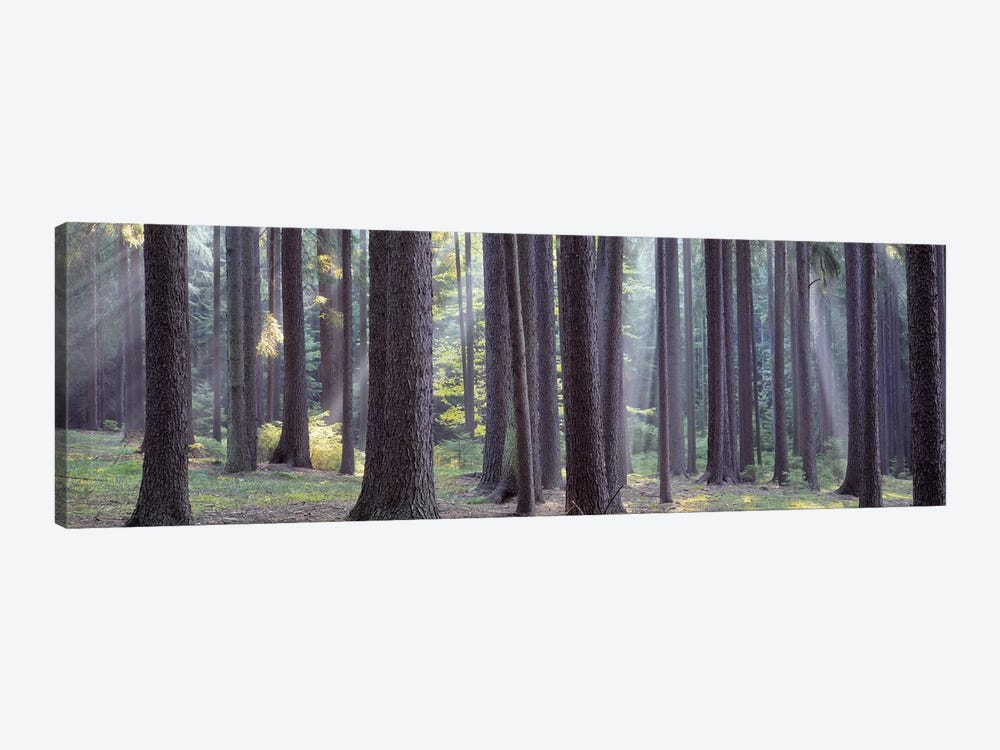 Trees in the forest, South Bohemia, Czech Republic #2 by Panoramic Images 1-piece Canvas Art Print