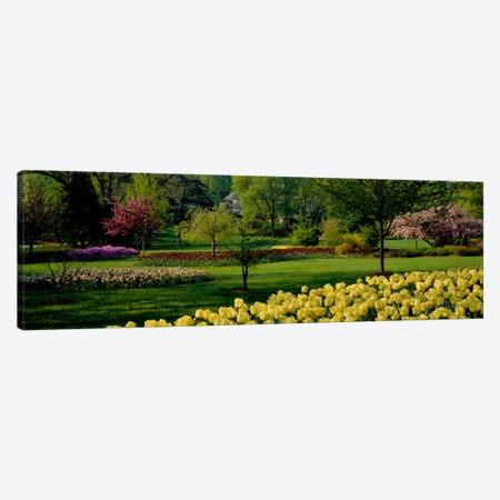 Tulip flowers in a garden, Sherwood Gardens, Baltimore, Maryland, USA Canvas Print #PIM534} by Panoramic Images Art Print
