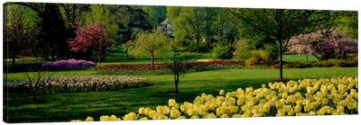 Tulip flowers in a garden, Sherwood Gardens, Baltimore, Maryland, USA Canvas Print #PIM534