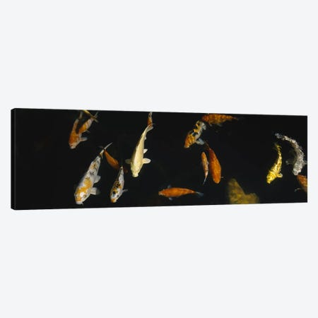 Close-up of a school of fish in an aquarium, Japanese Koi Fish, Capitol Aquarium, Sacramento, California, USA Canvas Print #PIM5362} by Panoramic Images Canvas Art Print