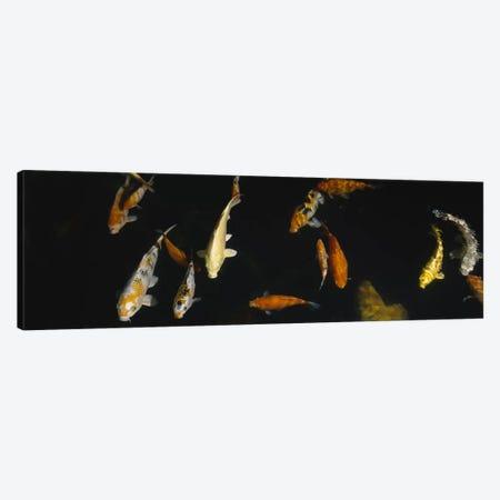 Close-up of a school of fish in an aquarium, Japanese Koi Fish, Capitol Aquarium, Sacramento, California, USA Canvas Print #PIM5362} by Panoramic Images Canvas Art Print