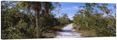 Dirt road passing through a forest, Indigo Trail, J.N. Ding Darling National Wildlife Refuge, Sanibel Island, Florida, USA Canvas Print #PIM5366