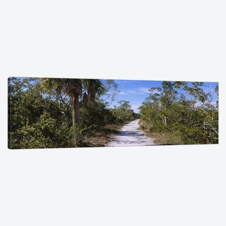Dirt road passing through a forest, Indigo Trail, J.N. Ding Darling National Wildlife Refuge, Sanibel Island, Florida, USA Canvas Print #PIM5366} by Panoramic Images Canvas Artwork