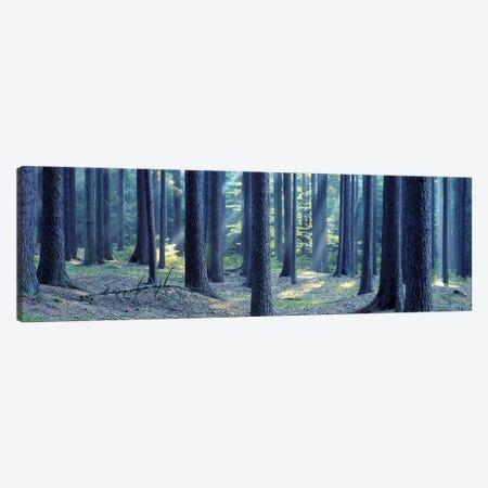 Trees in a forest, South Bohemia, Czech Republic Canvas Print #PIM5370} by Panoramic Images Canvas Artwork