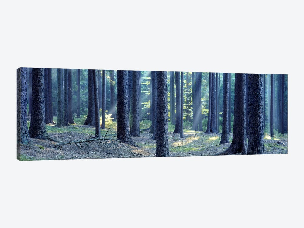 Trees in a forest, South Bohemia, Czech Republic by Panoramic Images 1-piece Canvas Print
