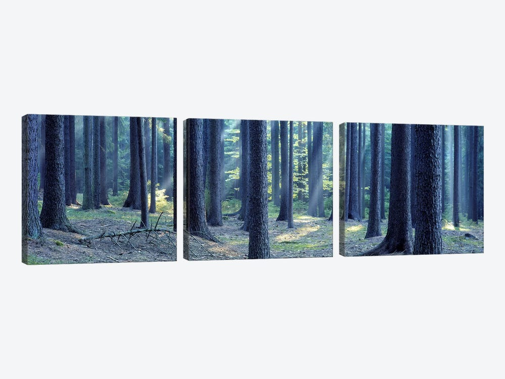 Trees in a forest, South Bohemia, Czech Republic by Panoramic Images 3-piece Art Print
