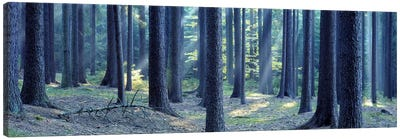 Trees in a forest, South Bohemia, Czech Republic Canvas Art Print
