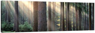Sunny Forest Landscape, South Bohemia, Czech Republic Canvas Print #PIM5371