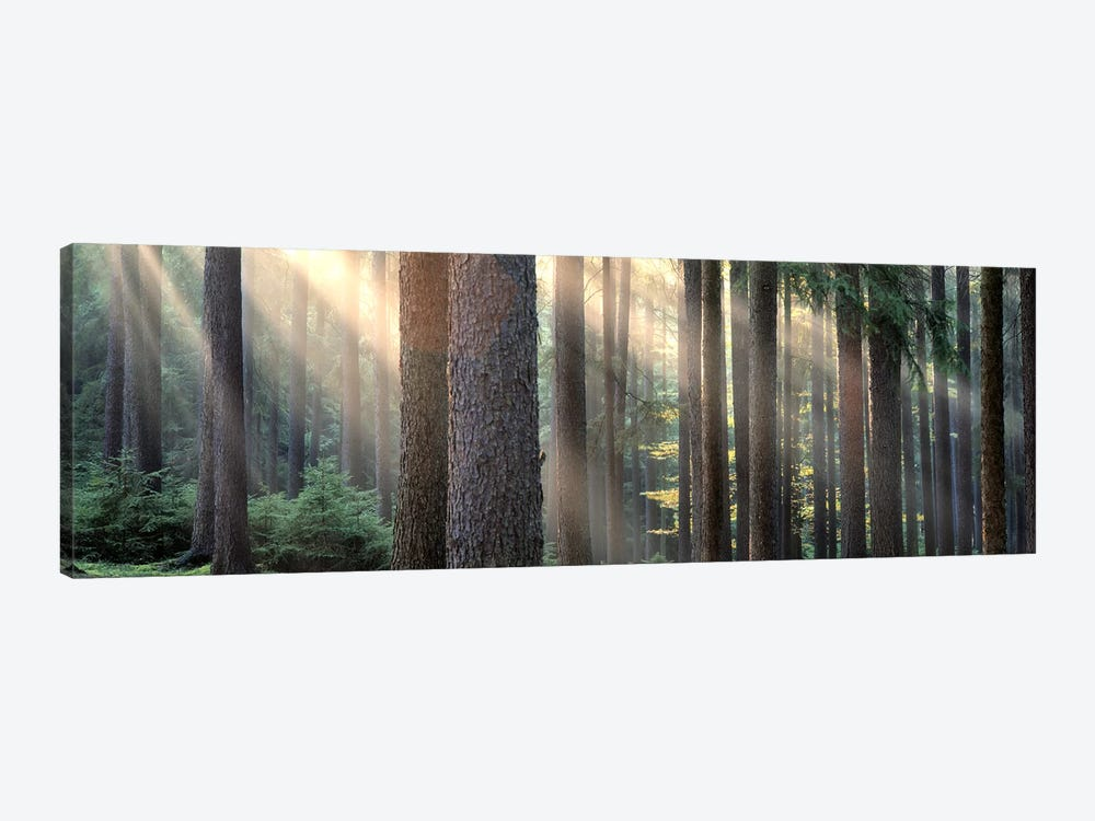 Sunny Forest Landscape, South Bohemia, Czech Republic 1-piece Canvas Art