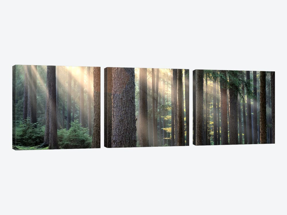 Sunny Forest Landscape, South Bohemia, Czech Republic by Panoramic Images 3-piece Canvas Artwork