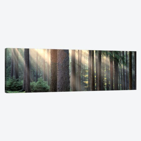 Sunny Forest Landscape, South Bohemia, Czech Republic Canvas Print #PIM5371} by Panoramic Images Canvas Wall Art
