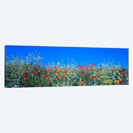 Poppy field Tableland N Germany Canvas Print #PIM542} by Panoramic Images Canvas Art Print