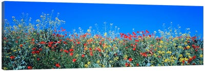 Poppy field Tableland N Germany Canvas Print #PIM542