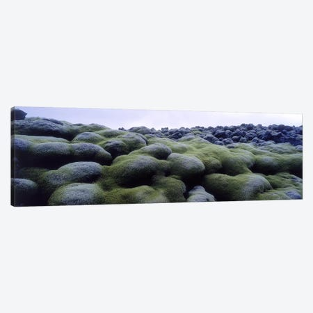 Close-Up Of Moss-Covered Lava Rocks, Iceland Canvas Print #PIM5445} by Panoramic Images Canvas Print