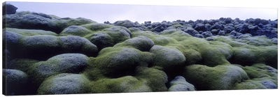 Close-Up Of Moss-Covered Lava Rocks, Iceland Canvas Art Print