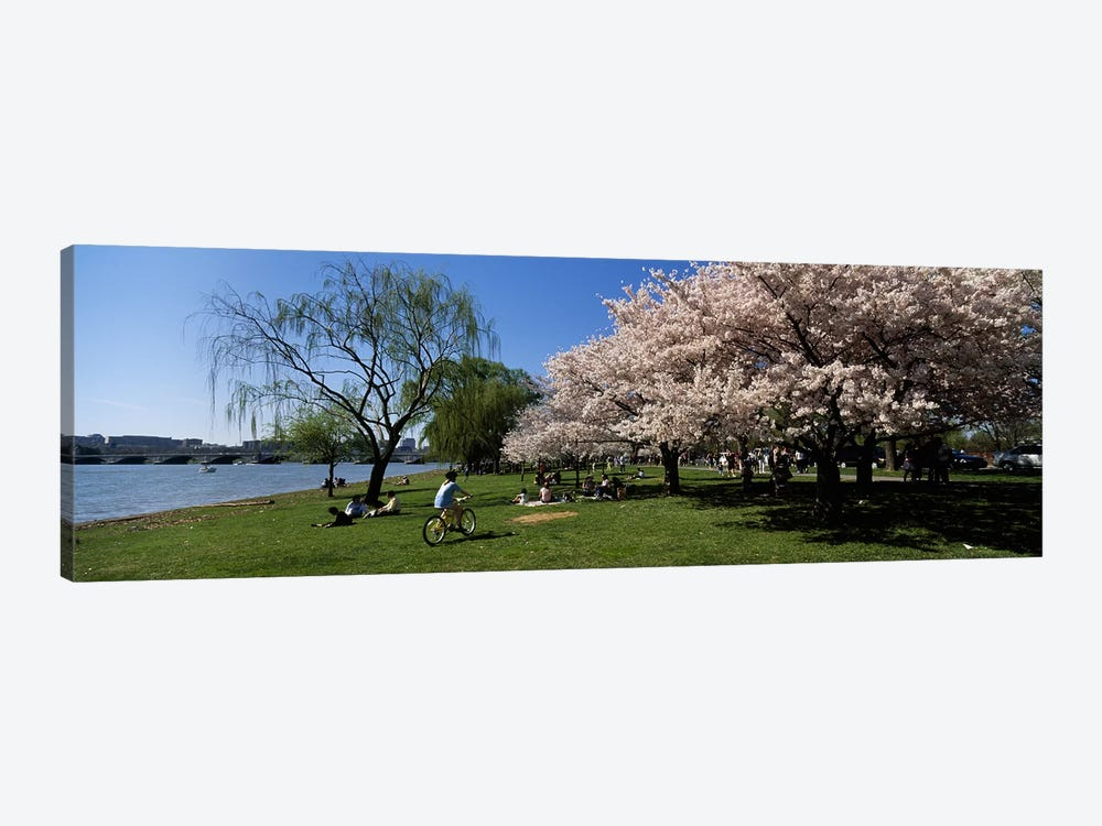 Group of people in a garden, Cherry Blossom, Washington DC, USA by Panoramic Images 1-piece Art Print