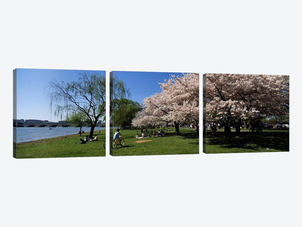 Group of people in a garden, Cherry Blossom, Washington DC, USA by Panoramic Images 3-piece Canvas Art Print