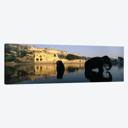 Silhouette of two elephants in a river, Amber Fort, Jaipur, Rajasthan, India Canvas Print #PIM5467} by Panoramic Images Canvas Art Print