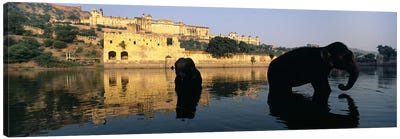 Silhouette of two elephants in a river, Amber Fort, Jaipur, Rajasthan, India Canvas Print #PIM5467