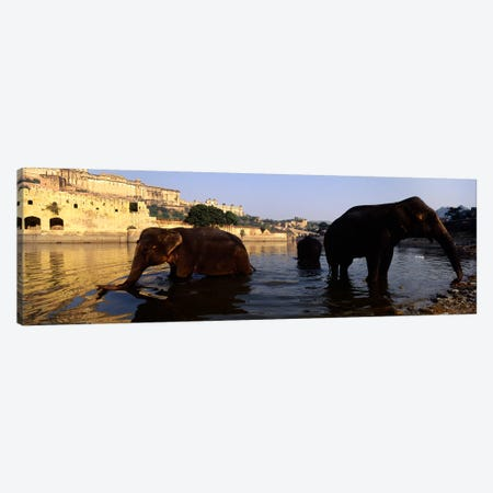 Three elephants in the river, Amber Fort, Jaipur, Rajasthan, India Canvas Print #PIM5469} by Panoramic Images Canvas Artwork
