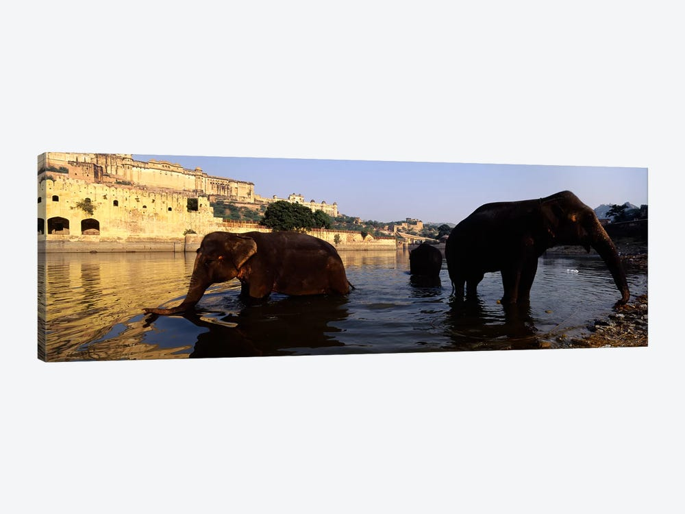 Three elephants in the river, Amber Fort, Jaipur, Rajasthan, India by Panoramic Images 1-piece Canvas Art