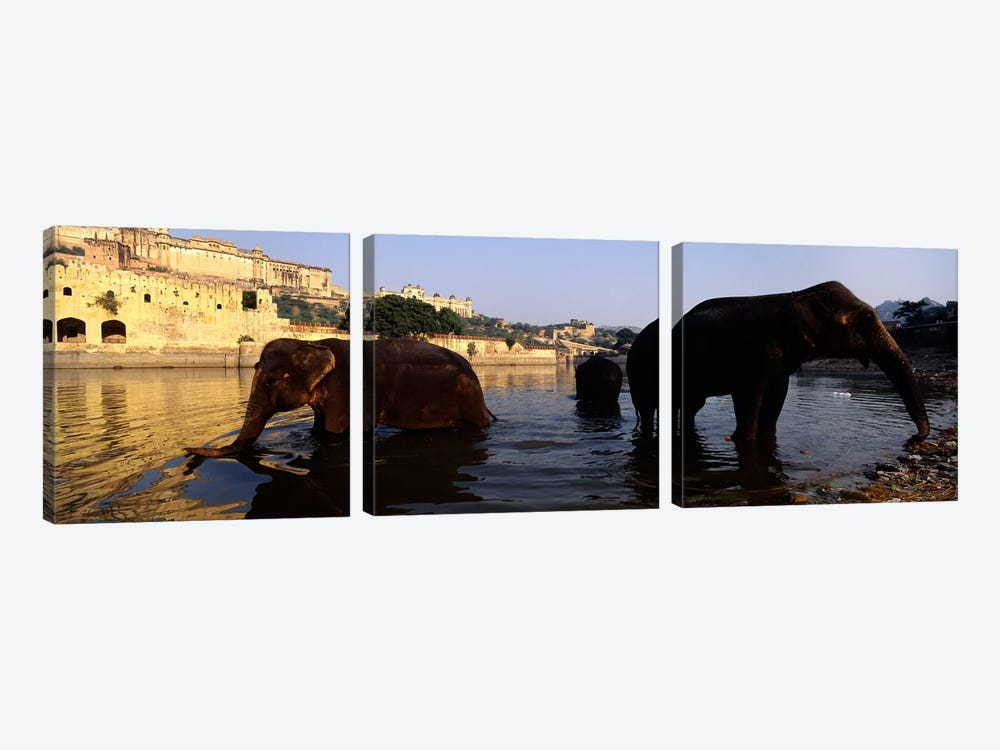 Three elephants in the river, Amber Fort, Jaipur, Rajasthan, India by Panoramic Images 3-piece Canvas Wall Art