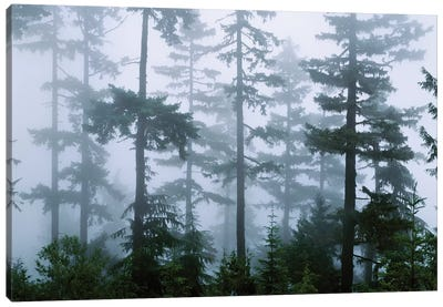 Foggy Forest Landscape, Olympic National Park, Washington, USA Canvas Art Print