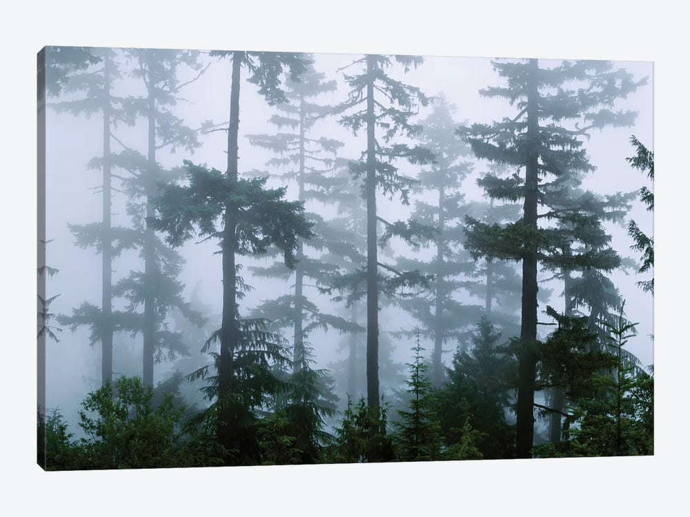 Foggy Forest Landscape, Olympic National Park, Washington, USA by Panoramic Images 1-piece Canvas Art