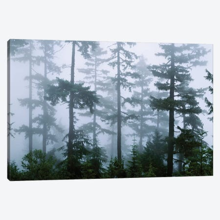 Foggy Forest Landscape, Olympic National Park, Washington, USA Canvas Print #PIM5568} by Panoramic Images Art Print