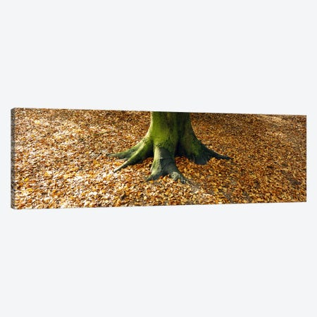 Low section view of a tree trunk, Berlin, Germany Canvas Print #PIM5583} by Panoramic Images Art Print