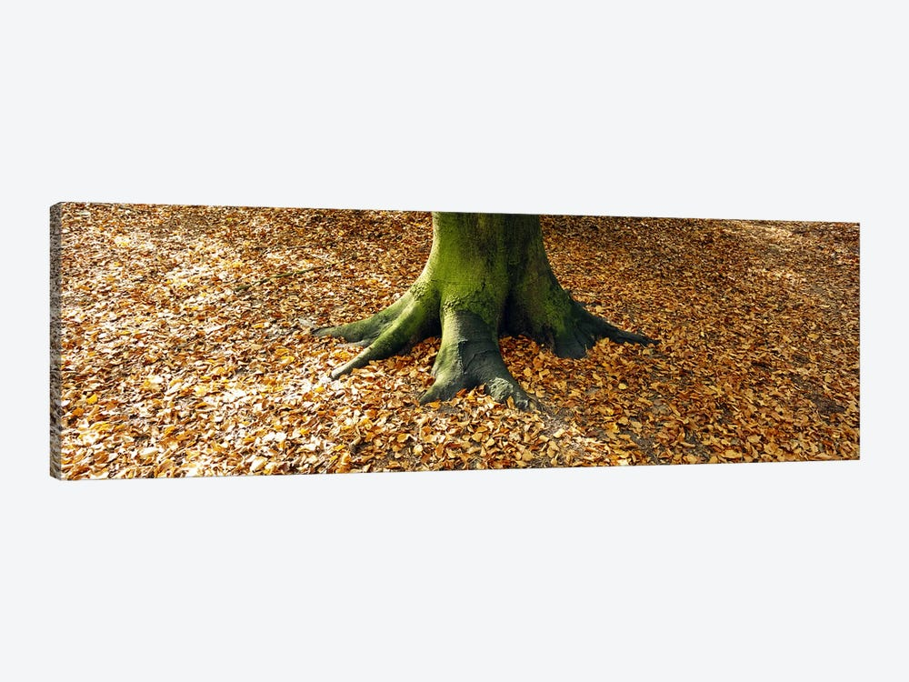 Low section view of a tree trunk, Berlin, Germany by Panoramic Images 1-piece Canvas Art Print