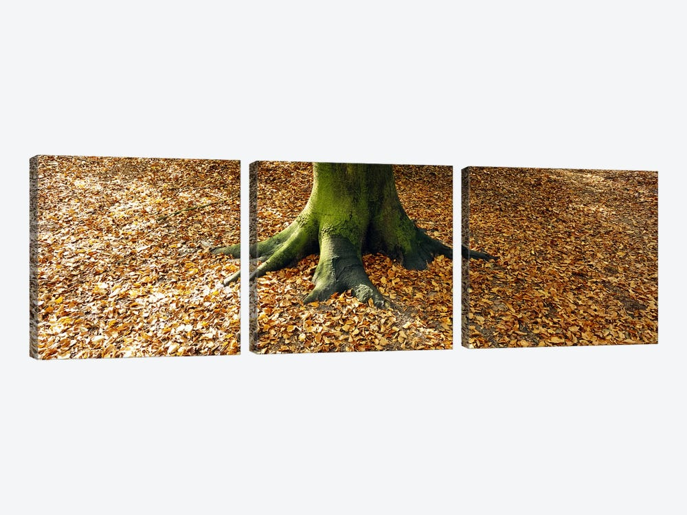 Low section view of a tree trunk, Berlin, Germany by Panoramic Images 3-piece Canvas Print