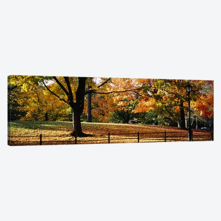 Trees in a forest, Central Park, Manhattan, New York City, New York, USA Canvas Print #PIM5595} by Panoramic Images Art Print