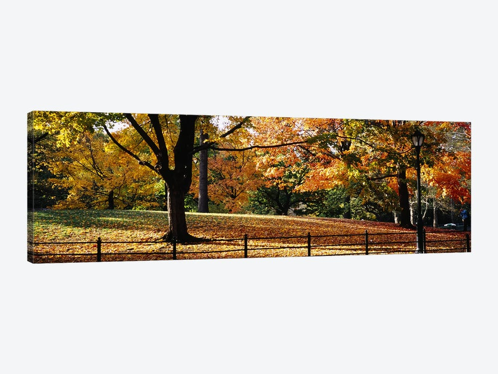 Trees in a forest, Central Park, Manhattan, New York City, New York, USA by Panoramic Images 1-piece Canvas Artwork