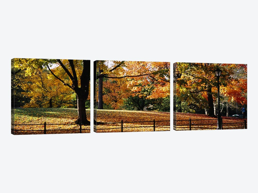 Trees in a forest, Central Park, Manhattan, New York City, New York, USA by Panoramic Images 3-piece Canvas Wall Art