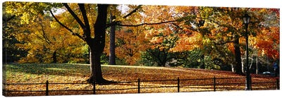 Trees in a forest, Central Park, Manhattan, New York City, New York, USA Canvas Art Print