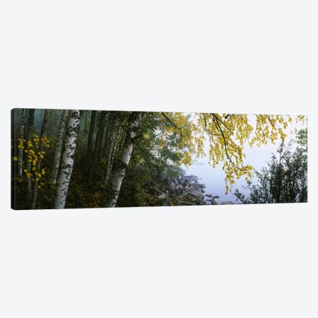 Birch Trees Along The Shore, Puumala, Southern Savonia, Finland Canvas Print #PIM5656} by Panoramic Images Canvas Art