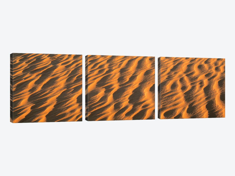 Wind blown Sand TX USA by Panoramic Images 3-piece Canvas Wall Art