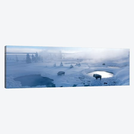 Bison West Thumb Geyser Basin Yellowstone National Park, Wyoming, USA Canvas Print #PIM569} by Panoramic Images Canvas Art Print