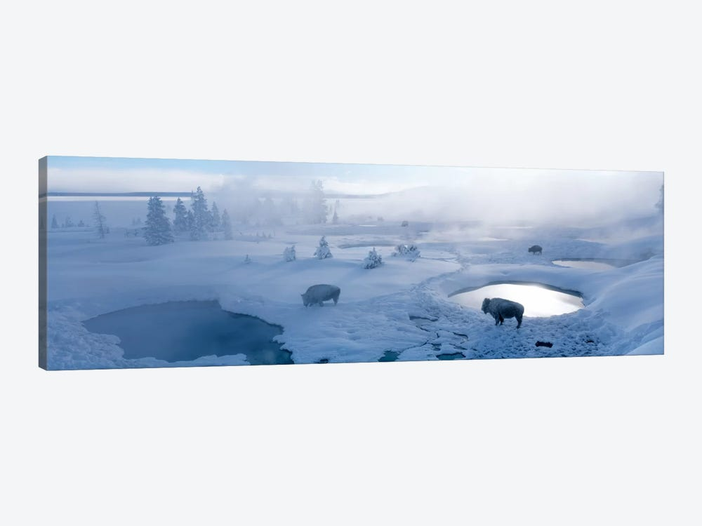 Bison West Thumb Geyser Basin Yellowstone National Park, Wyoming, USA by Panoramic Images 1-piece Art Print