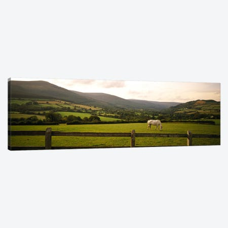Lone Horse At Pasture, Enniskerry, County Wicklow, Leinster Province, Republic Of Ireland Canvas Print #PIM5704} by Panoramic Images Canvas Artwork