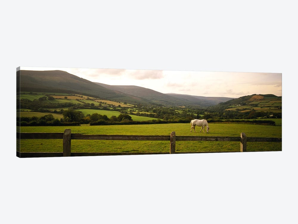 Lone Horse At Pasture, Enniskerry, County Wicklow, Leinster Province, Republic Of Ireland by Panoramic Images 1-piece Canvas Print